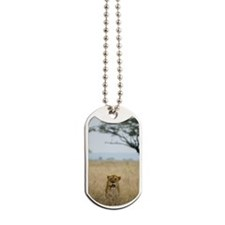 Lion walking in grass Dog Tags