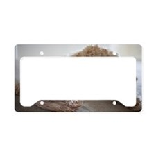 USA, New York, New York City, License Plate Holder