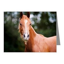 Young brown quarter horse ea Note Cards (Pk of 20)