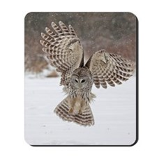 Barred owl hunting Mousepad