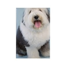 Portrait of old English Sheepdog  Rectangle Magnet