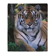 Tiger resting Panthera tigris Throw Blanket
