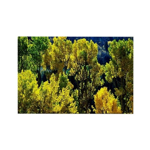 Aspen tree tops Rectangle Magnet