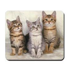 Three American Shorthair Cats Sitting on Mousepad