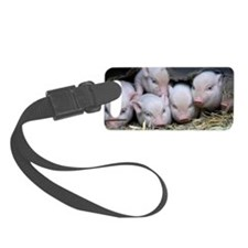 Piglet003 Small Luggage Tag
