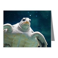 Close up of sea turtle in an Note Cards (Pk of 20)