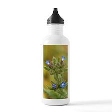 Bugloss (Anchusa arven Water Bottle