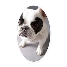 Dog Oval Car Magnet