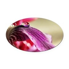 Droplet of water on lily petal Oval Car Magnet