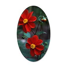 Dwarf hybrid Dahlia flowers 35x21 Oval Wall Decal