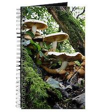 Shaggy pholiota fungi Journal