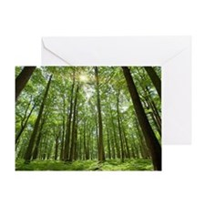 Forest with Sun Behind Greeting Card