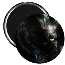 One Eyed Close-up of Black Cat Magnet
