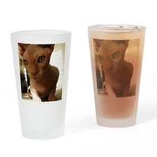 Naked Cat Up-Close Drinking Glass
