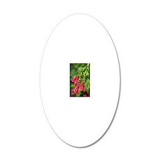 Hybrid fuchsia (Triphylla Gr 20x12 Oval Wall Decal