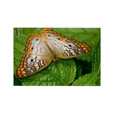 White Peacock Butterfly 5.5 x 7.5 Rectangle Magnet