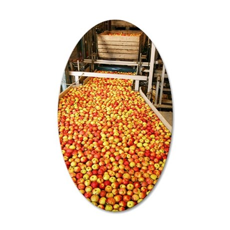 Apple processing 35x21 Oval Wall Decal