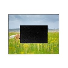 Horse running in field. Picture Frame