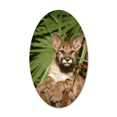 florida panther, felis conco 35x21 Oval Wall Decal