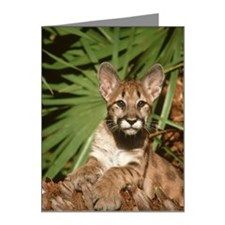 florida panther, felis conco Note Cards (Pk of 20)
