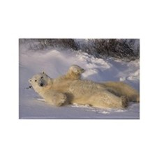 polar bear, ursus martimus, wakin Rectangle Magnet