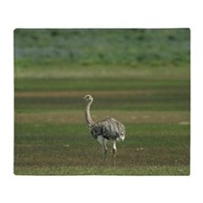 darwins or lesser rhea or: nandu  pt Throw Blanket