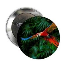 "Fight of Macaw 2.25"" Button"