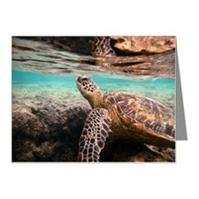 Turtle Note Cards (Pk of 10)