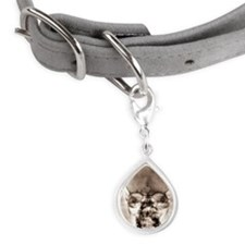 skull x-ray Small Teardrop Pet Tag