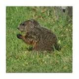Young Groundhog Tile Coaster
