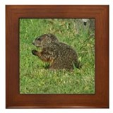 Young Groundhog Framed Tile