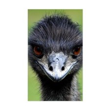 Emu stare Decal