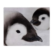 Emperor penguin chicks, Snow Hill Is Throw Blanket