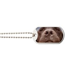 Spain, Costa Blanca, Chocolate labrador's Dog Tags