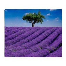 Lavender field in summer with one tr Throw Blanket