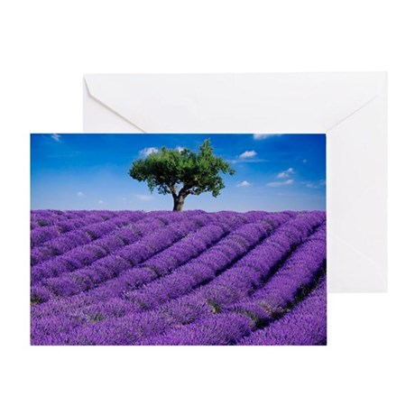 Lavender field in summer with one tr Greeting Card