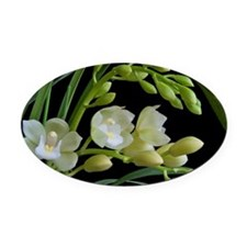 White cymbidium orchid Oval Car Magnet