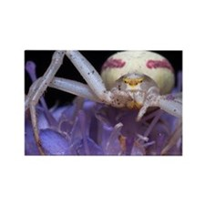 Goldenrod crab spider Rectangle Magnet