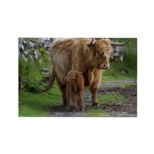 Highland cattle mother and calf Rectangle Magnet