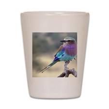 Lilac-breasted Roller Shot Glass