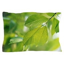 Leaf Pillow Case