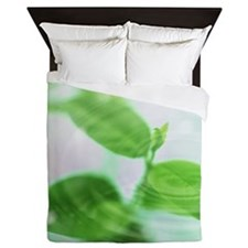 Green leaves and water drops Queen Duvet