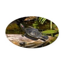 Red Eared Slider turtle sunning on Oval Car Magnet