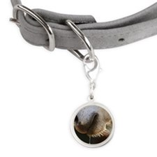Horse snout Small Round Pet Tag