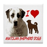 Cute Anatolian shepherd dog Tile Coaster