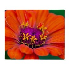 Orange zinnia flower with purple cen Throw Blanket