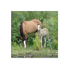"""Mare  Foal Square Sticker 3"""" x 3"""""""