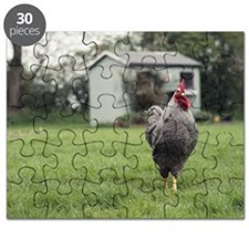 Chicken roaming in garden Puzzle