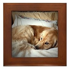 Golden Retriever puppy Framed Tile