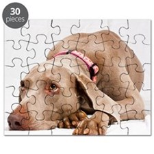Waiting weimaraner dog Puzzle